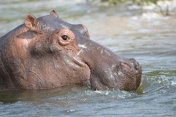 Nijlpaard van Frank Heinen
