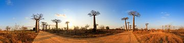 360 panorama Baobabs in Madagaskar van Dennis van de Water