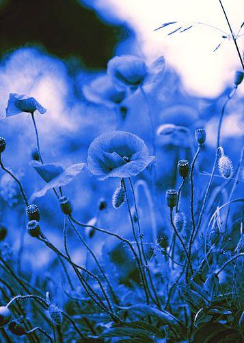 Poppy beeld in Blue von Falko Follert