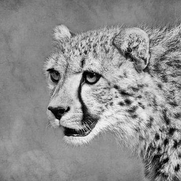 Schwarz-Weiß-Porträt eines Geparden von Fotografie Jeronimo