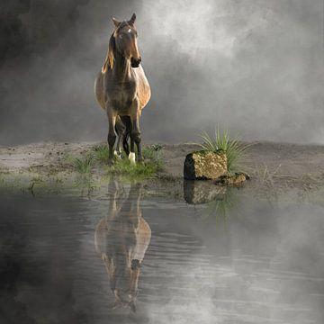 Pferde von Cora Deutekom