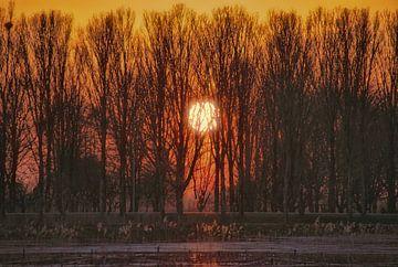 Zie de zon zakt tussen de bomen. van Jurjen Jan Snikkenburg