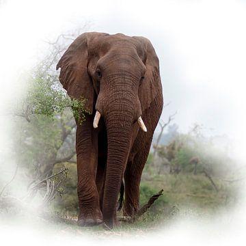 Elefant im Krüger-Park von Petra Lakerveld