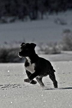 Puppy Greyster von Brenda Gonzalez