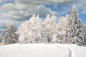 Winter in het Beierse Woud van Peter Eckert