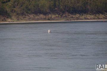 boei in water van Irkutsk van Robert Lotman