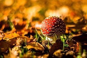 Op een grote paddenstoel... van