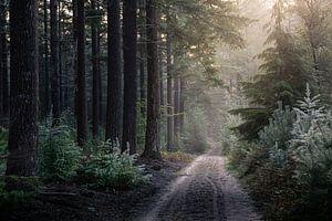 SUMMER FADES AWAY van Algon Photography