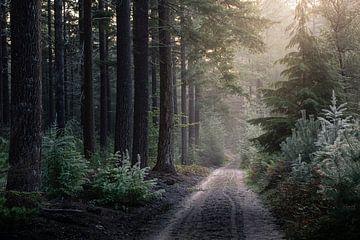 DER SOMMER VERGEHT von Algon Photography