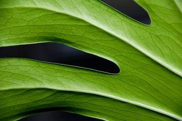 groene vingers van jan van de ven