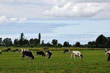Alte holländische Landschaft mit einer Kuhherde auf einer Wiese in der Nähe von Woerden, inmitten de von Robin Verhoef
