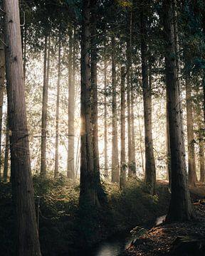 Zonsopkomst in het bos van Isa V
