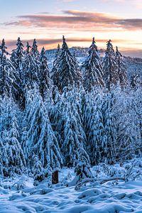 Paysage d'hiver au soleil du soir sur Jens Sessler