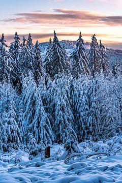 Paysage d'hiver au soleil du soir