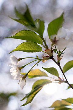 Blühende Blüte von Evelien Oerlemans