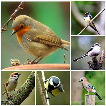 Vogels van Ines Thun