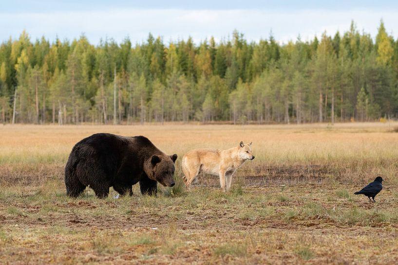Wolf en bruine beer van Nanda Bussers