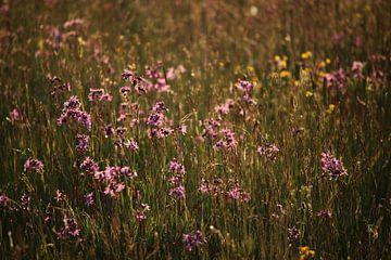 Blumenmeer (2 von 2) von Jeroen Gutte
