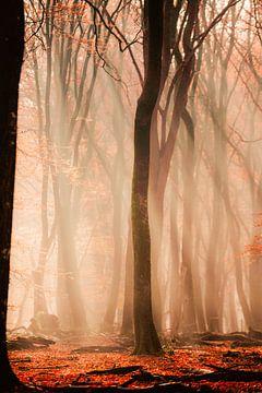 Lichtstrahlen, Speulderbos von Marleen Kuijpers