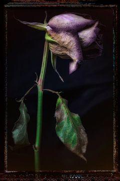 Alte Blumen 17 von Henk Leijen