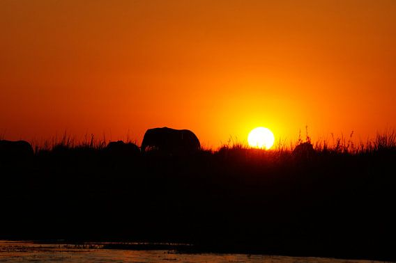 Olifant tijdens zonsondergang