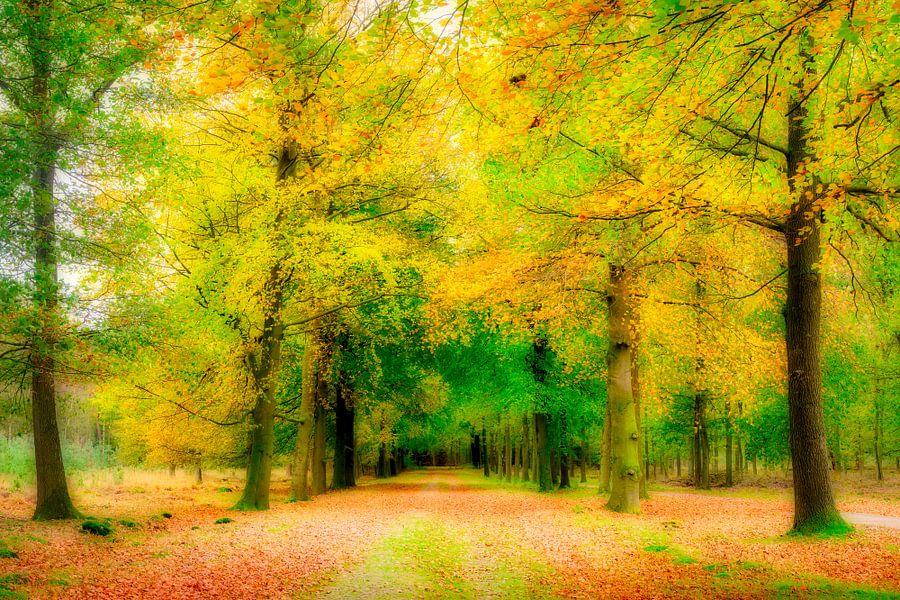 het bos vol herfstkleuren van eric van der eijk
