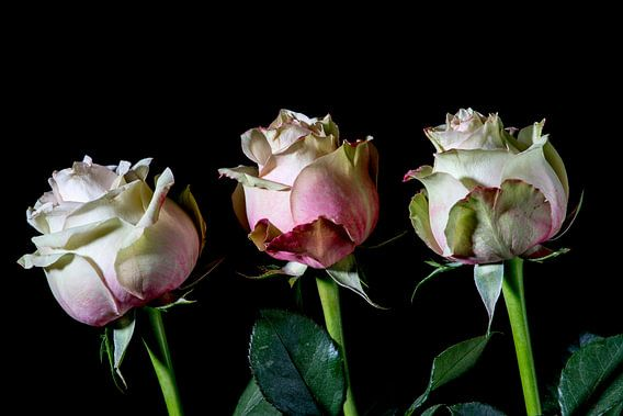 drie rozen, een teken van leven en liefde