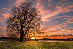 Een alleenstaande boom tijdens een zonsondergang van