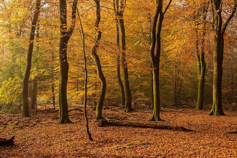 bos in de herfst  van Contrast inBeeld