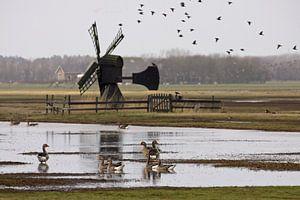 Weidemolen op Texel