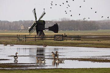 Weidemolen op Texel sur Antwan Janssen