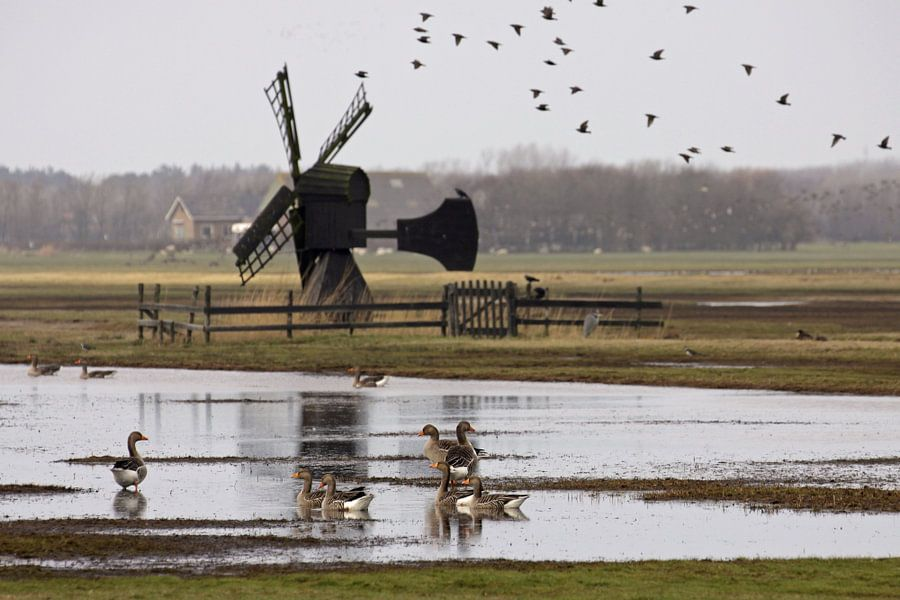 Weidemolen op Texel van Antwan Janssen