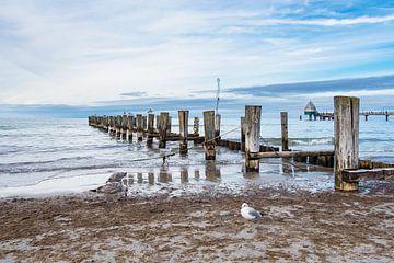 Buhnen am Strand von Zingst von Rico Ködder