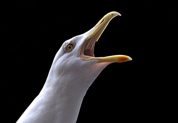 Close-up schreeuwende meeuw