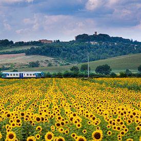 Zomertijd.....zonnebloemen in Toscane van Teun Ruijters