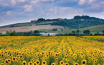Zomertijd.....zonnebloemen in Toscane