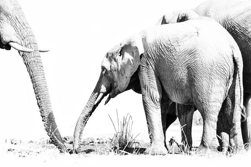 Elefanten von Robert Styppa