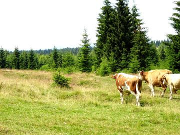 Grazende koeien  van Wilma Rigo