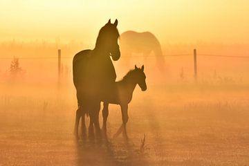 Friese paarden tijdens zonsopkomst van Jitske Van der gaast