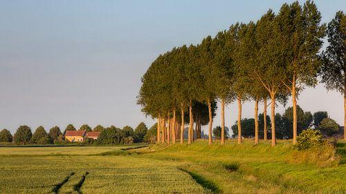 Polder landschap in avondlicht van Bram van Broekhoven