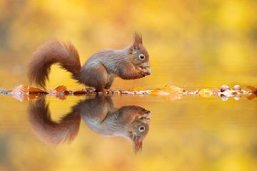 Écureuil d'automne sur Dick van Duijn