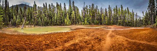Sporen in de okergekleurde aarde, Kootenay National Park, Canada