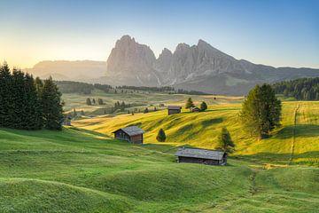 Matin d'été sur l'Alpe di Siusi