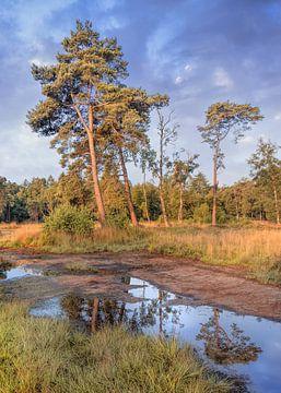 Landschap met bosrand en bomen op zonnige dag, Nederland sur Tony Vingerhoets
