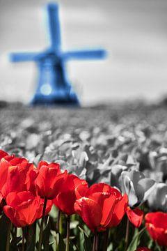 Rot Weiß Blau von Raoul Suermondt