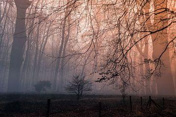 Märchenhafter Zauber im Wald von Idema Media