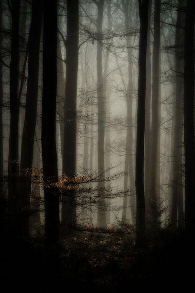 Misty woods van Peter Lambrichs