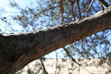 Einsamer Baum in der Veluwe. von Remco Mulder