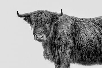 Tough fine-art Porträt schottischen Highlander in schwarz und weiß von Lotte van Alderen