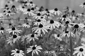 Bloemen in zwart-wit
